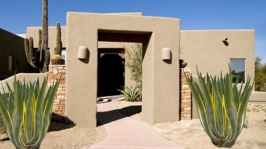 Variegated century plant for Desert Landscaping