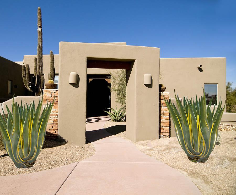 Variegated century plant for Desert Landscaping