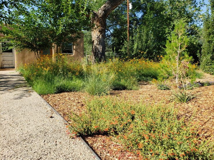 Landscaping in Albuquerque New Mexico with Native Plants and Paths and meadow xeriscape