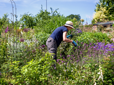 a person works in a garden
