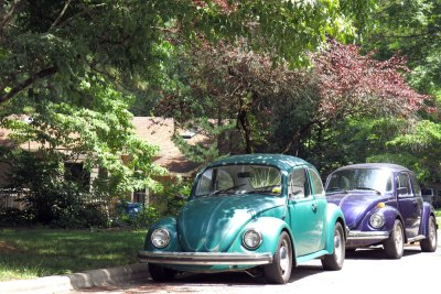 VW Beetles in Avent West