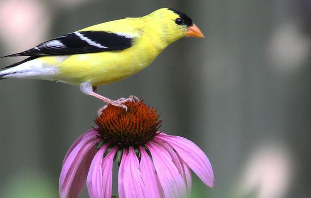 Gardens for Birds