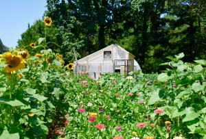 Art in the Garden @ The Well Fed Community Garden | Raleigh | North Carolina | United States