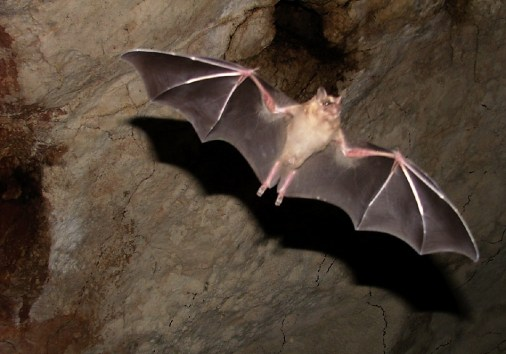 Cute bats in the cenote caves.
