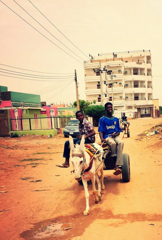 It is common to see many horses and donkeys in the streets of Sudan. They are used to transport goods.