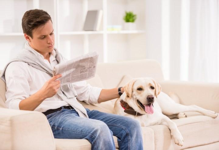 Pode ter animais de estimação em condomínios? O que diz a lei?