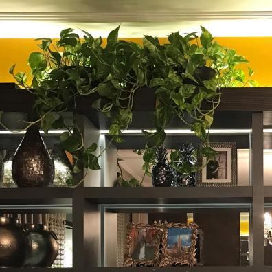 dicas para cuidar de plantas dentro de casa