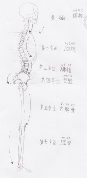 絵の練習法上達法クロッキー骨格のカーブ弯曲について
