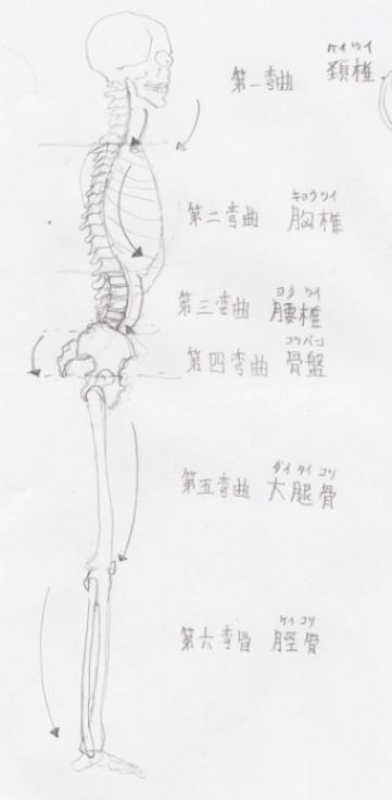 全体図:骨格