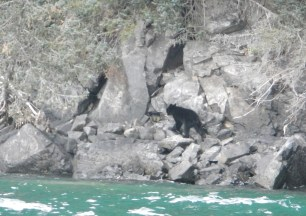 The bear was more surprised than we were, which is saying something