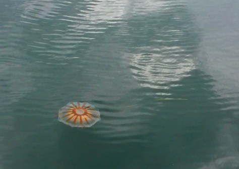 some kind of jellyfish