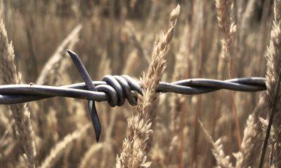 Цхивали негативно отреагировал на патрулирование линии оккупации