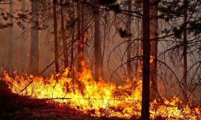 Борьба с огнем близ курорта Абастумани в регионе Самцхе-Джавахети продолжается.