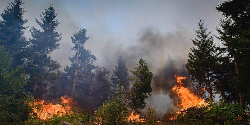 Абастумани пожар