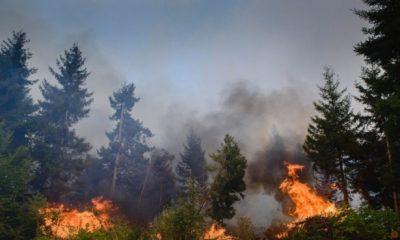 Сводка о пожарах на территории Грузии