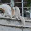Как живут бродячие собаки Тбилиси во время COVID-19