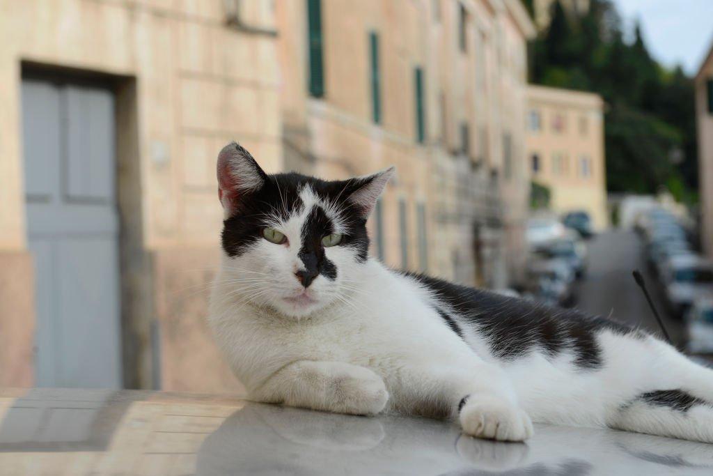 Кот на итальянской улице