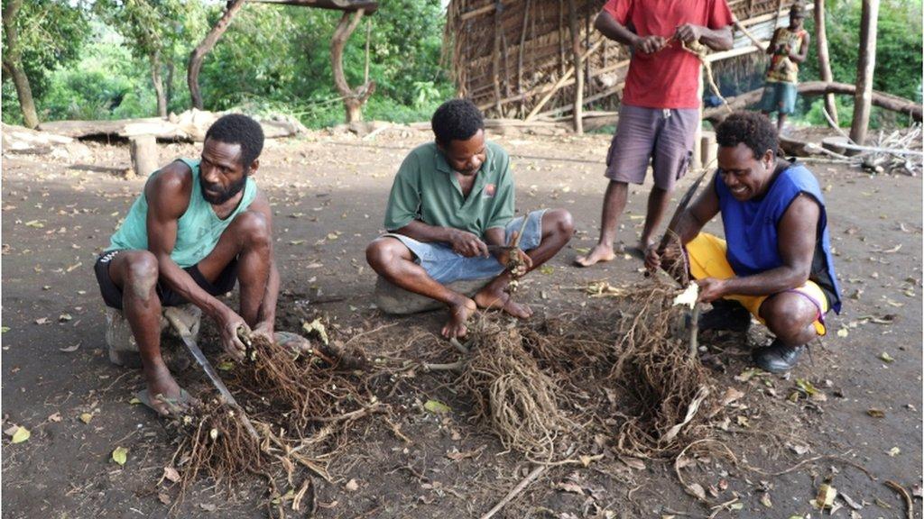 Мужчины племени готовят напиток из корней кавы, 10 апреля 2021 года