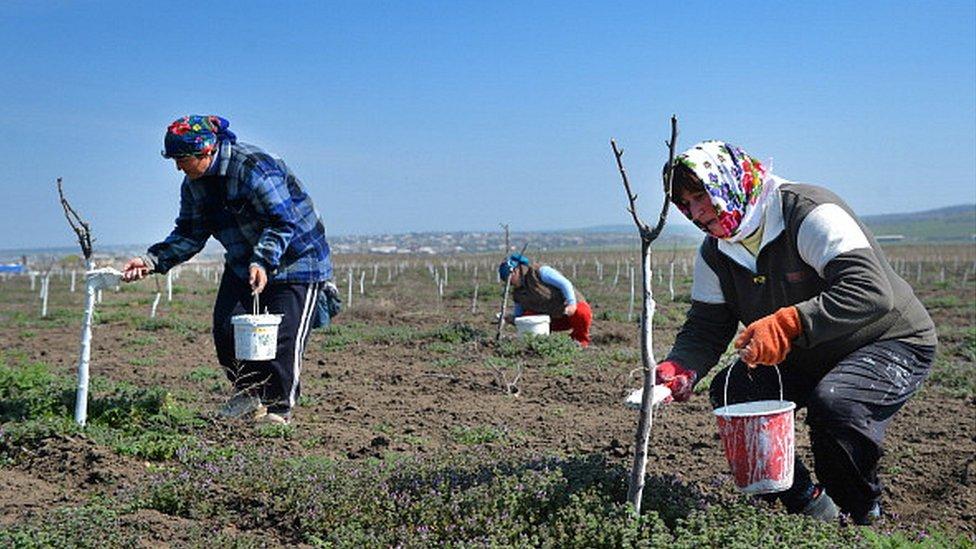 Сельское хозяйство Гагаузии