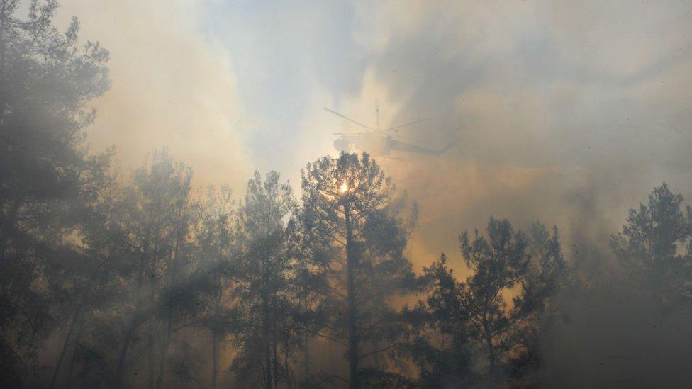 Горящий лес и пожарный вертолет