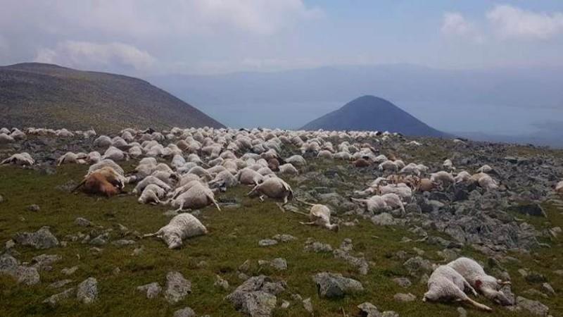 ovechki #новости Абули, Джавахети, молния, сельское хозяйство, скотоводство