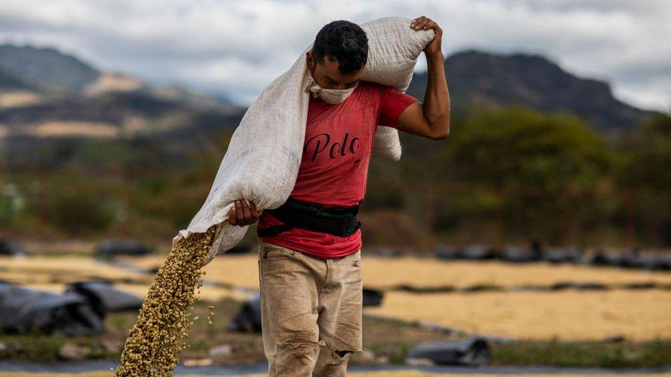 Работникам кофейных плантаций в Никарагуа не перепадет ни цента от подорожания кофе на мировом рынке