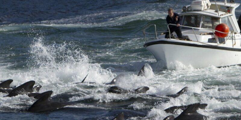 120541768 gettyimages 160089006 594x594 1 Новости BBC убийство дельфинов