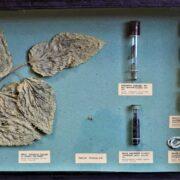123646093 10157488824820740 5870694314524606653 n #другая сова featured, история Грузии, музей шелка, шелк, шелковый путь