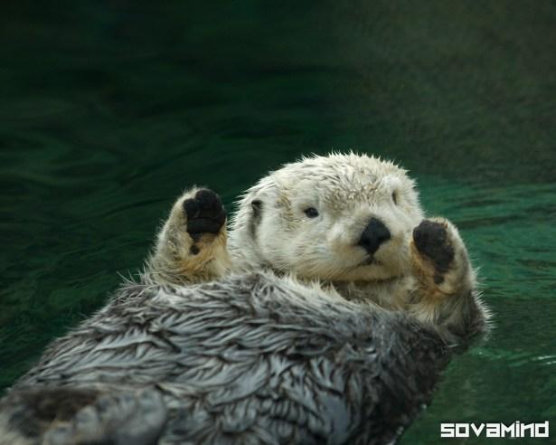 Otter, Oregon Zoo
