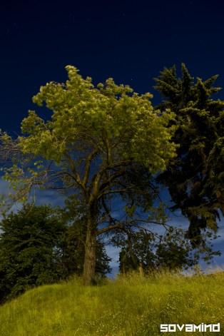 Night Treas, Portland, Oregon.