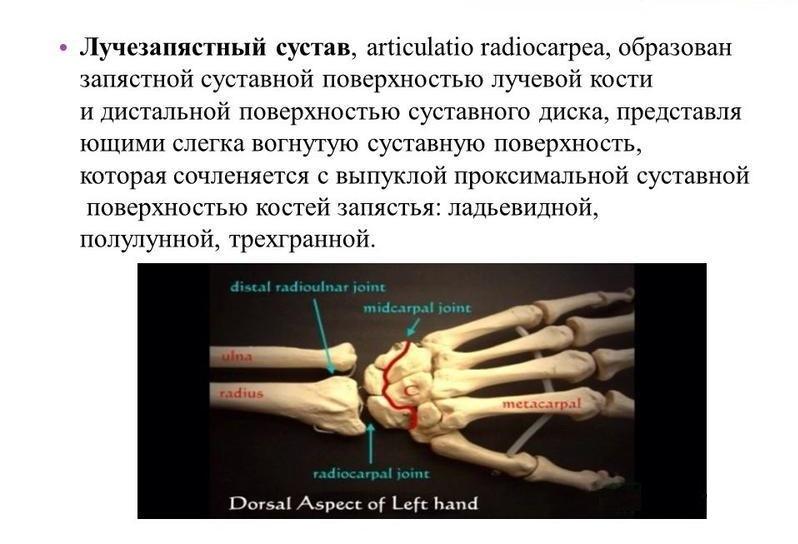 ízületi kezelési tünetek arthrosis ple kezelés