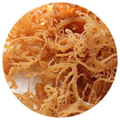 Sun dried and raw sea moss