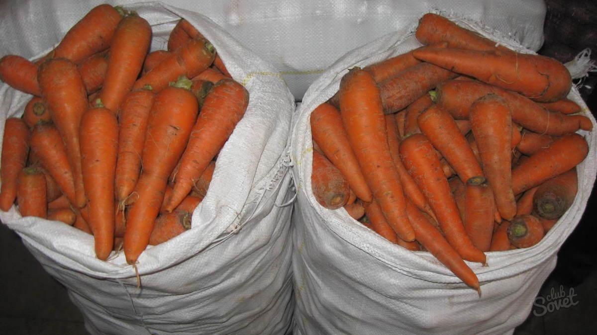 17+ Die richtige Lagerung von Karotten zu Hause   verschiedene ... Fotografie
