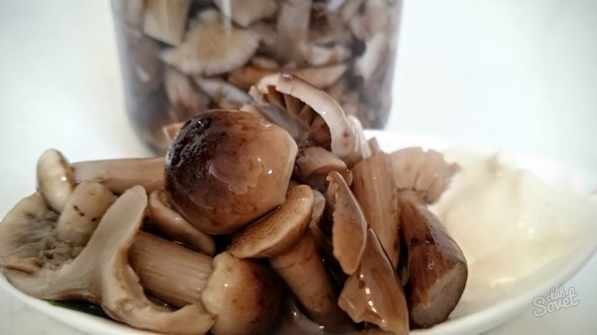 Что можно приготовить из грибов рядовка