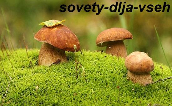Вредные свойства грибов