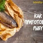 Как приготовить вкусную рыбу: самый большой список рецептов