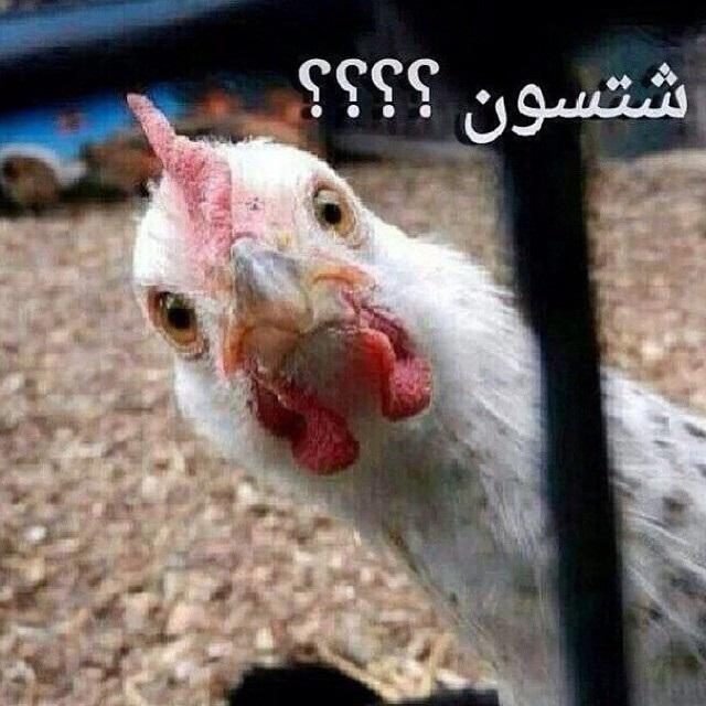 صور كومنتات عراقية صور مضحكة نكت فيس بوك واتس اب انستقرام