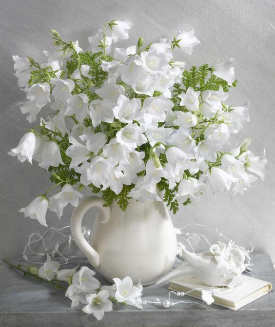 أجمل صور زهور بيضاء صور ورد وزهور Rose Flower Images