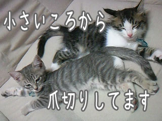 猫の爪切り手順