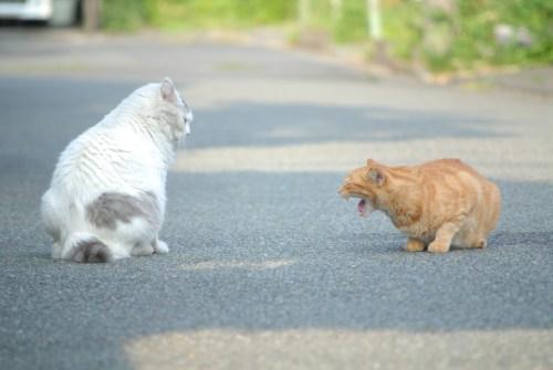 猫の去勢する前の性格