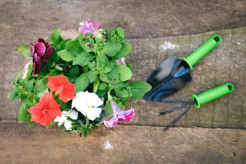 夏の花を花壇で楽しむ