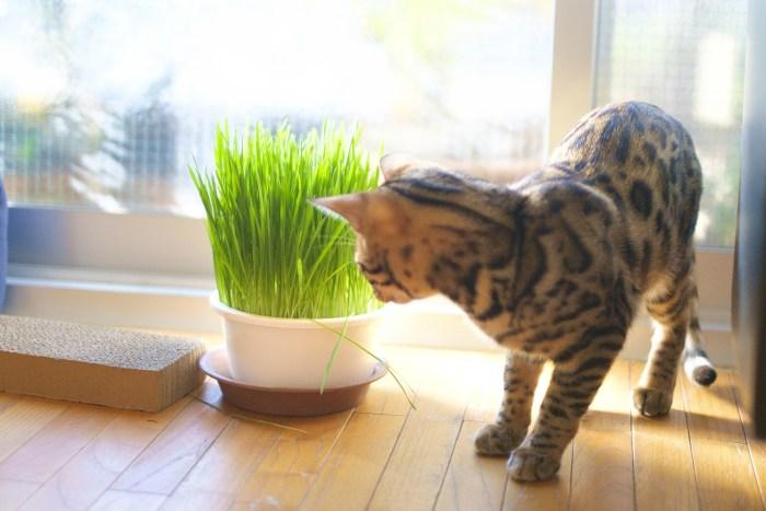 猫にとって危険な花と植物2