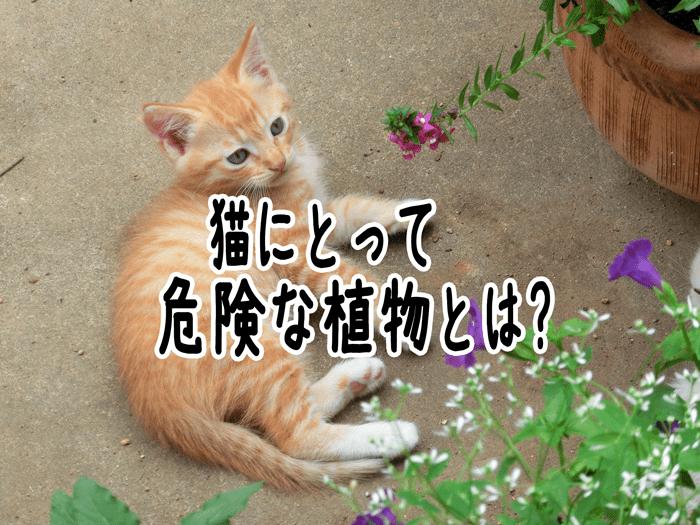 猫にとって危険な花と植物