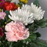 お供えする花の種類カーネーション