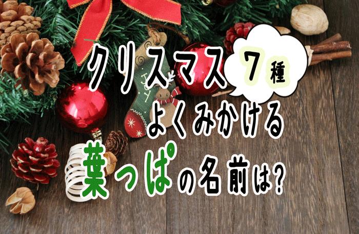 クリスマスに見る葉っぱの名前は?