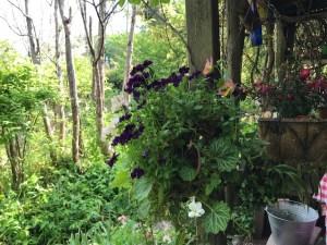 日本版ターシャの庭岐阜の入り口2