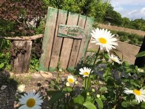 ターシャの庭を岐阜に再現デージーも発見