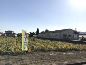 枝豆まつり嬉野2019年開催