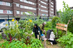 Evelyn Community Gardens, Deptford, London. STRICTLY FRIENDS OF THE EARTH USE ONLY