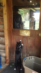Poblano wants to go inside
